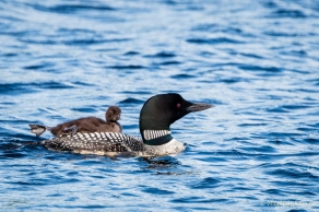 Loons-5