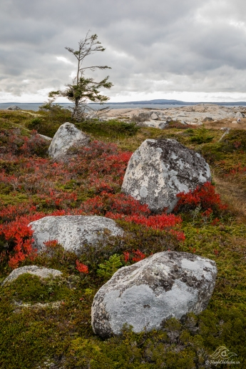 Barrens near Peggy's Cove